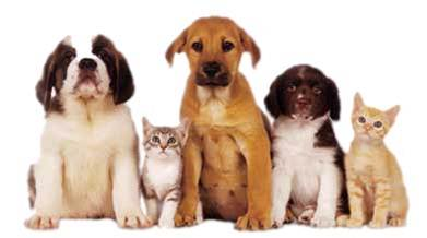 PET BEHAVIOR MEDICINE