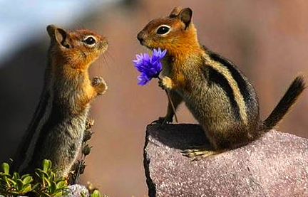 chipmunk friends